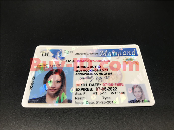 Premium Scannable Old Maryland State Fake ID Card Positive Display